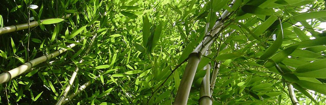 Bambus Teppichkontor